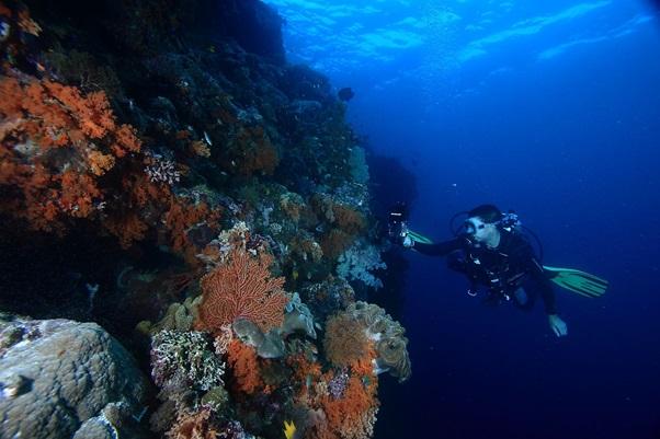 Wakatobi: The Best Dive Resort in Indonesia